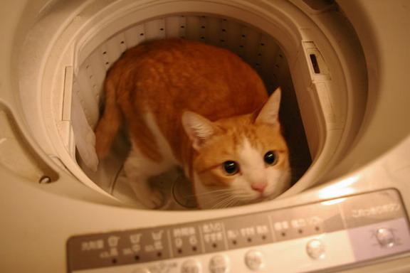 猫 洗濯機\(^o^)/