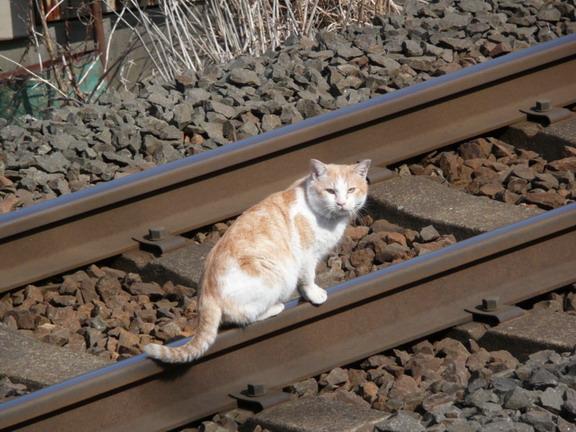 猫身事故なう\(^o^)/