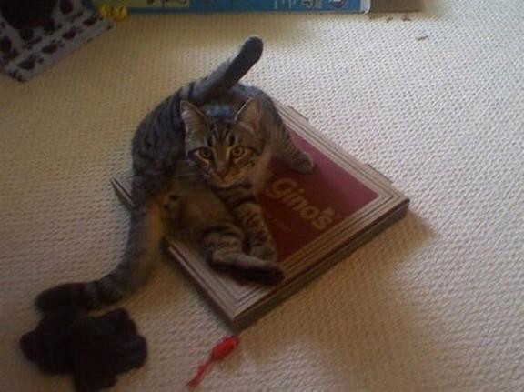猫ハットピザ\(^o^)/