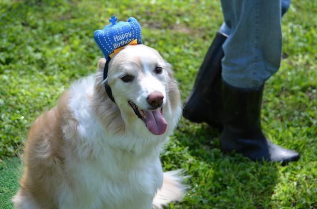 誕生日犬森2