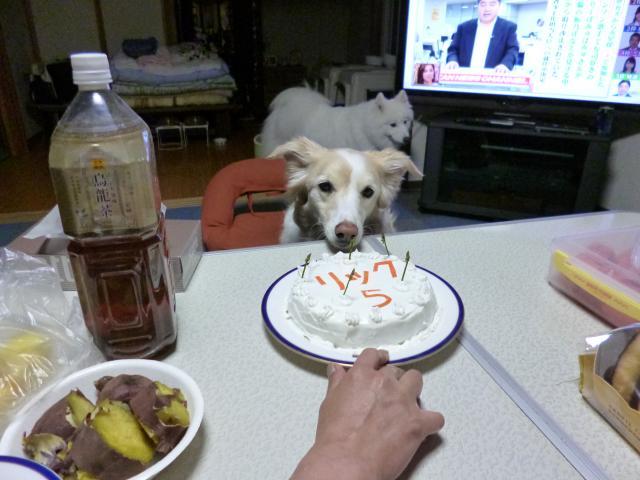 誕生日犬森10