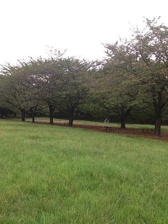 川崎市の公園2