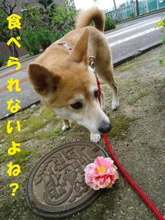 落ちたお花