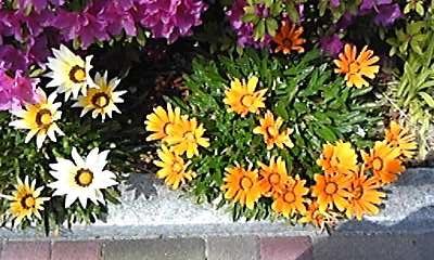 130429お花