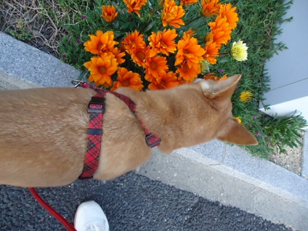 オレンジ花2