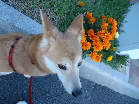 オレンジ花3