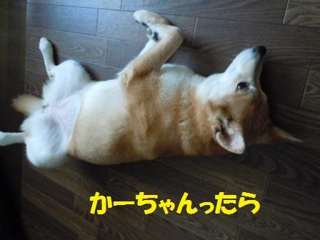 寝るクー1