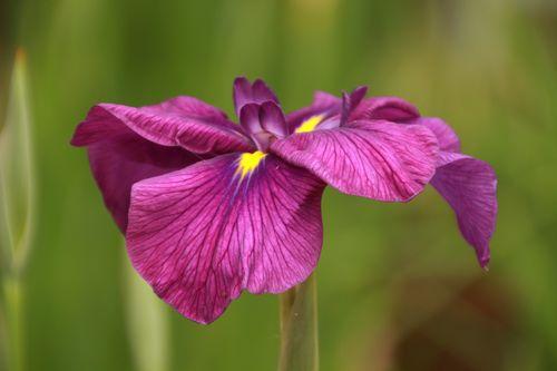 花はな 040