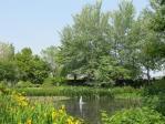 モネの池みたい