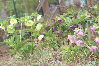 春の庭 002