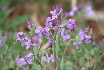 春の庭 004