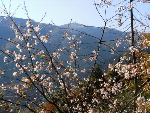 桜と城峯山