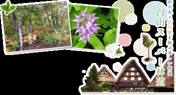 6月1日 岐阜県側料金所~蓮如茶屋(白川郷展望台)まで一部区間供用開始。