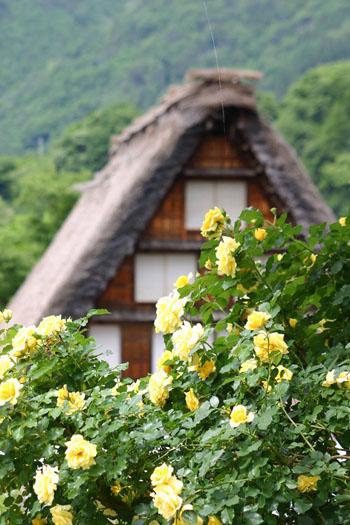 梅雨 雨季ウキ 白川郷⑤