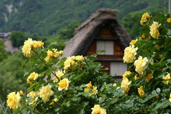 梅雨 雨季ウキ 白川郷⑦