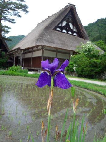 梅雨の時期におススメ!雨が似合う観光名所 世界遺産 白川郷⑦