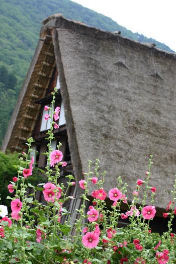 この季節の花&白川郷合掌造り ①