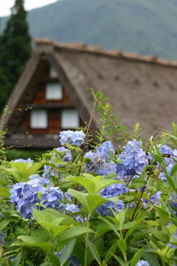 この季節の花&白川郷合掌造り ⑦