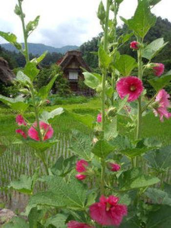 夏休みは白川郷へ遊びに来ませんか? 家族旅行やお友達同士の旅行など、グループ旅行にオススメ ②