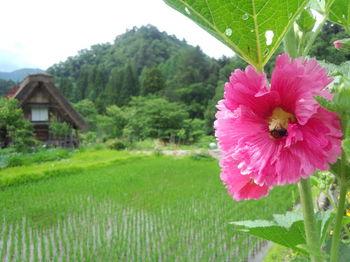夏休みは白川郷へ遊びに来ませんか? 家族旅行やお友達同士の旅行など、グループ旅行にオススメ ④