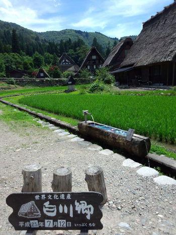 世界遺産白川郷を巡る旅に、いざ出発! ①