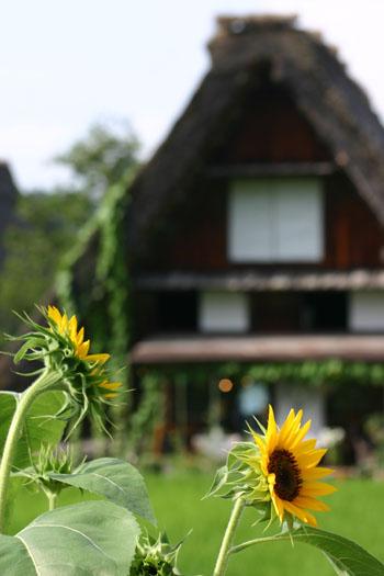 【お盆】夏の世界遺産 白川郷を楽しむ★自然!観光!温泉!魅力満点♪ ⑤