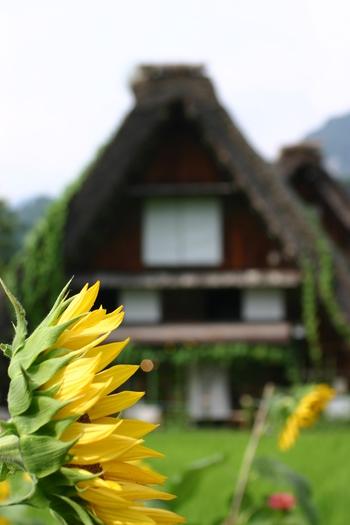 夏だぁ~!☆ お盆休み~ズラして 世界遺産 白川郷へ行こう ⑦
