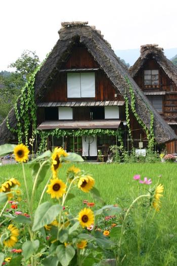 お盆休みは、ご家族でもお友達でも、 みんなで旅行ができる機会  世界遺産 白川郷 ⑦