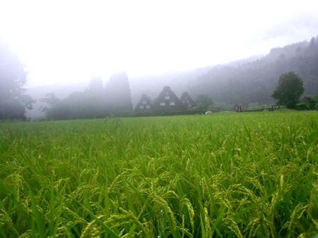 大自然に囲まれた白川郷~雨にも強い ①