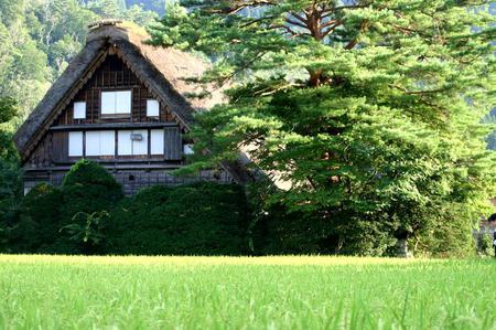 暑さも少しずつ和らぎ、夏休みも終わり、、、 季節は夏から秋へ。。。 秋の始まり!世界遺産 白川郷 ⑧