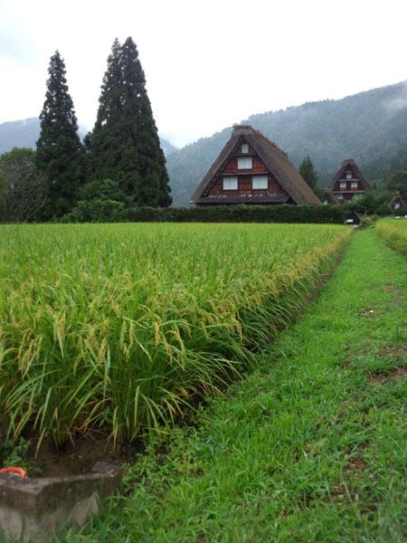 夏~秋には美しい稲穂が揺れ、郷らしい景色 ①