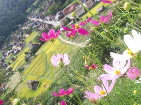 昨年の9月上旬~世界遺産 白川郷~秋の風景 ⑦