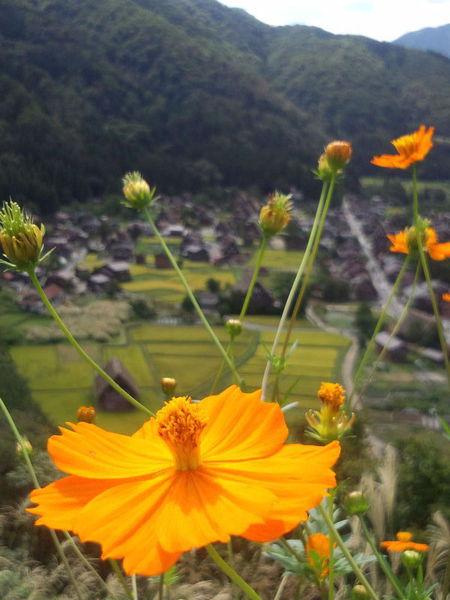 昨年の9月上旬~世界遺産 白川郷~秋の風景 ⑧