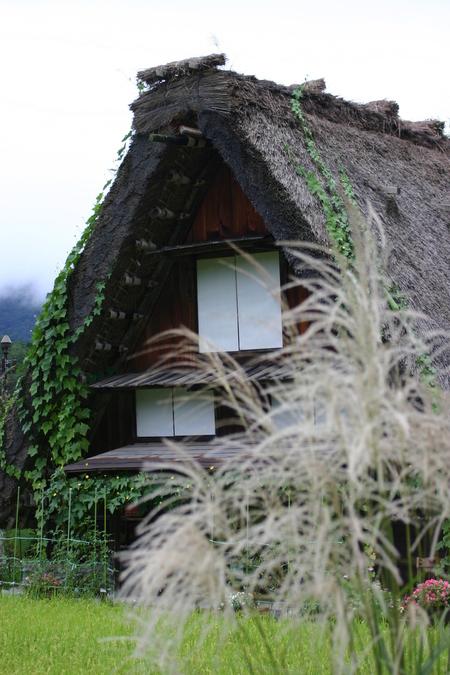 白川郷では9月終わりから10月にかけて各地区ごとの神社でどぶろく祭が行われます~④