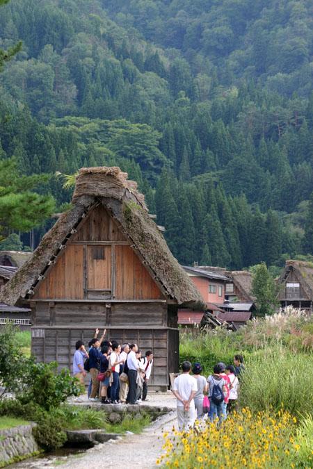黄金色に染まった稲穂や、風に揺れるススキ など、風情ある日本の秋~世界遺産 白川郷~散策 ④