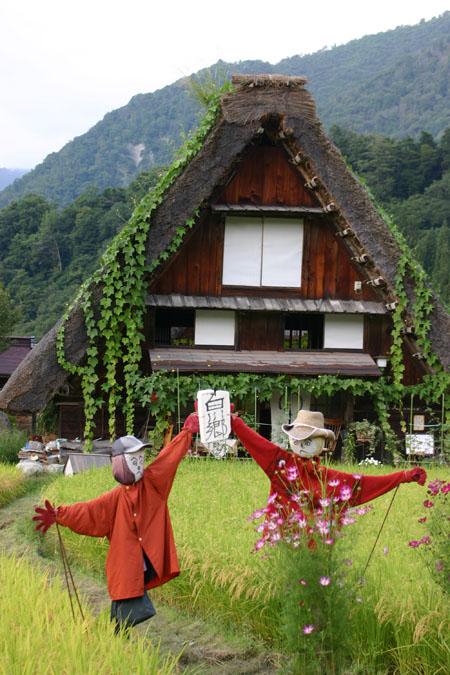 黄金色に染まった稲穂や、風に揺れるススキ など、風情ある日本の秋~世界遺産 白川郷~散策 ⑤