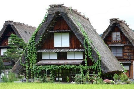 黄金色に染まった稲穂や、風に揺れるススキ など、風情ある日本の秋~世界遺産 白川郷~散策 ⑥