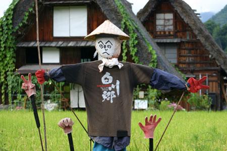 黄金色に染まった稲穂や、風に揺れるススキ など、風情ある日本の秋~世界遺産 白川郷~散策 ⑦
