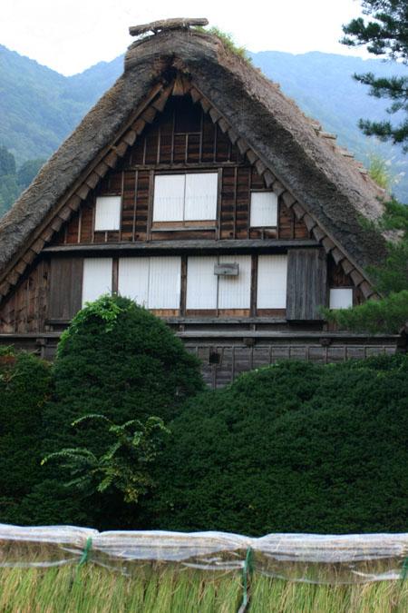 白川郷~稲刈り~始まる 稲架掛け風景 秋のおでかけに~ ①