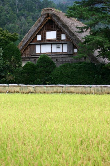 白川郷~稲刈り~始まる 稲架掛け風景 秋のおでかけに~ ③