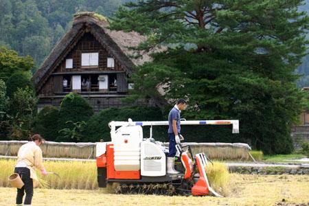 白川郷~秋の収穫~稲刈り風景(和田家合掌造り) ②