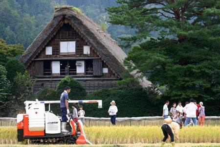 白川郷~秋の収穫~稲刈り風景(和田家合掌造り) ⑥