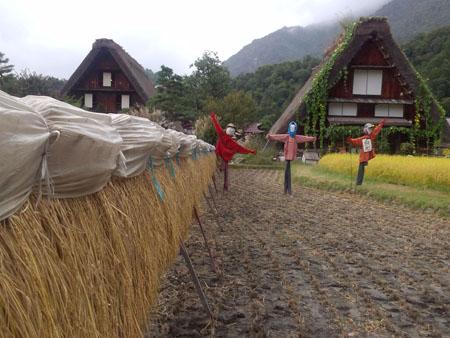 秋の陽を浴びた稲架~合掌造りの家が一体となって白川郷ならではの風景を演出~①