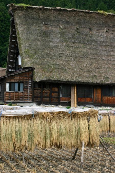 秋の陽を浴びた稲架~合掌造りの家が一体となって白川郷ならではの風景を演出~②
