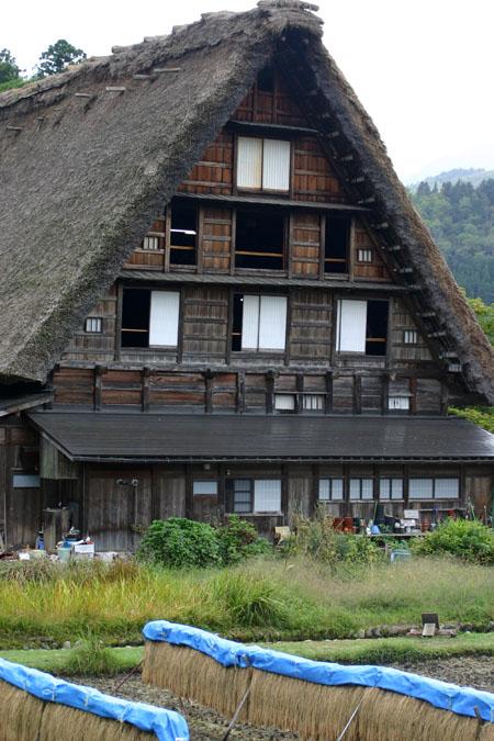 秋の陽を浴びた稲架~合掌造りの家が一体となって白川郷ならではの風景を演出~⑤