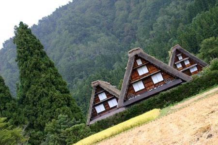 秋の陽を浴びた稲架~合掌造りの家が一体となって白川郷ならではの風景を演出~⑥