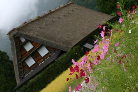 秋の陽を浴びた稲架~合掌造りの家が一体となって白川郷ならではの風景を演出~⑦