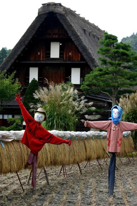 刈り取った稲を天日干しする「稲架(はざかけ)」風景~世界遺産 白川郷 ④