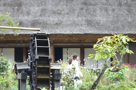刈り取った稲を天日干しする「稲架(はざかけ)」風景~世界遺産 白川郷 ⑥