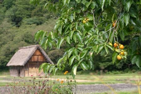 今年の秋旅行は、そうだ白川郷へGO! 紅葉シーズン間近~白山スーパー林道~美しく色づいた山並みをお楽しみ下さい(n'∀')η⑥